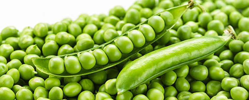Pea Protein – Healthy Food Trend – Beneficial for Heart Health and Weight Loss